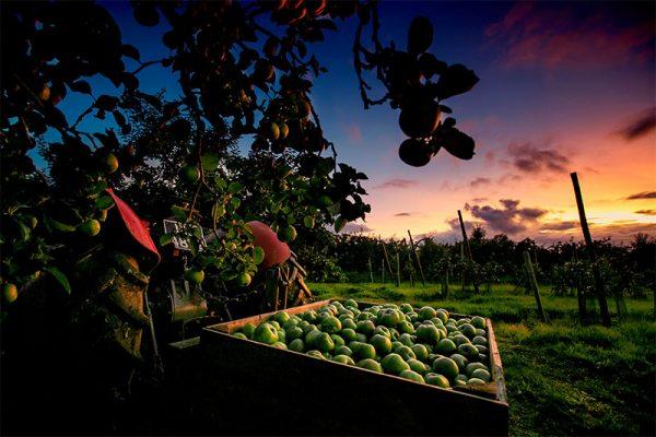 foodheartland-stories
