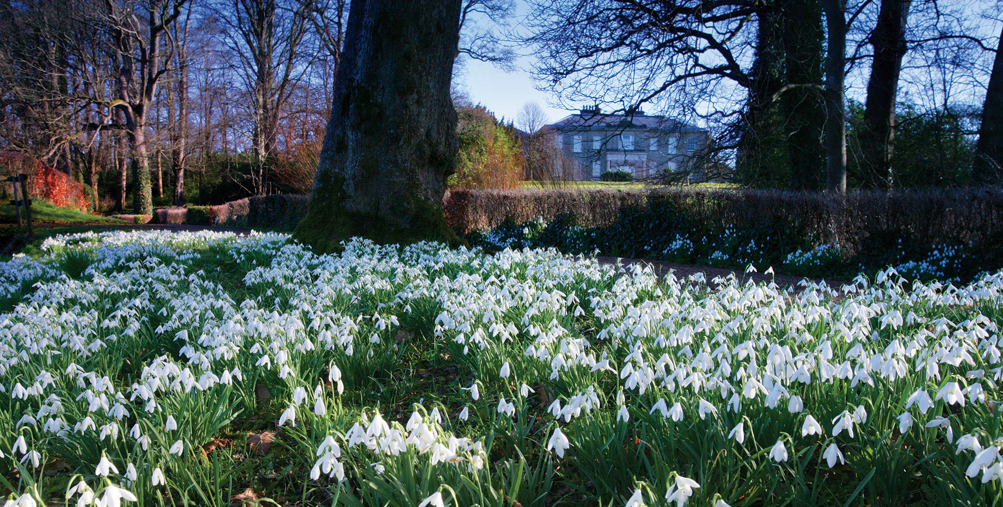 Snowdrop Walks