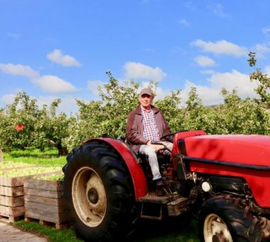 Tractor collecting apples